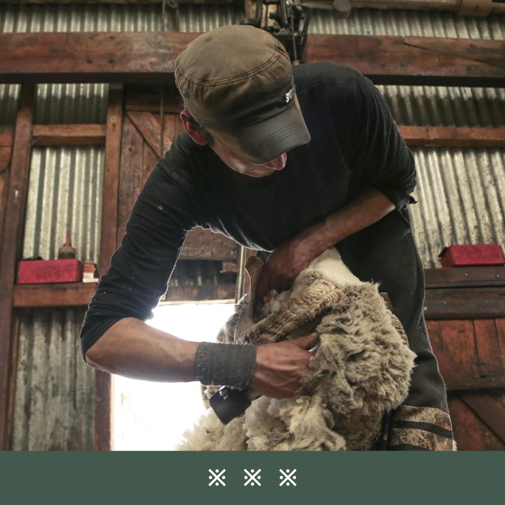 jak-pozyskuje-sie-welne-dormeuil-tonik-wool28