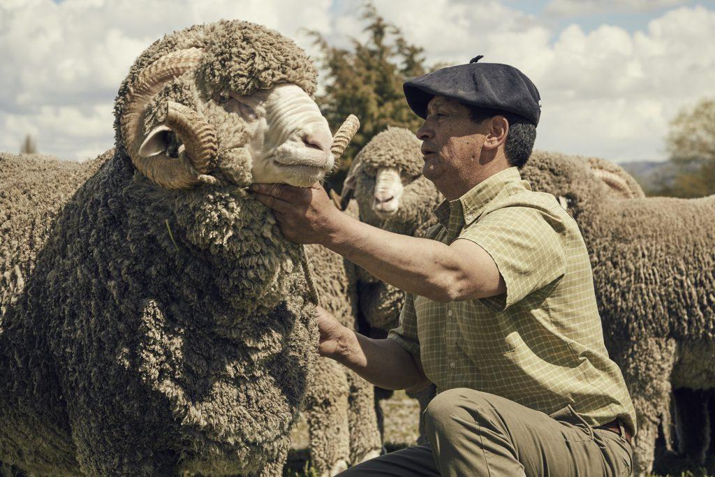 jak-pozyskuje-sie-welne-dormeuil-tonik-wool5